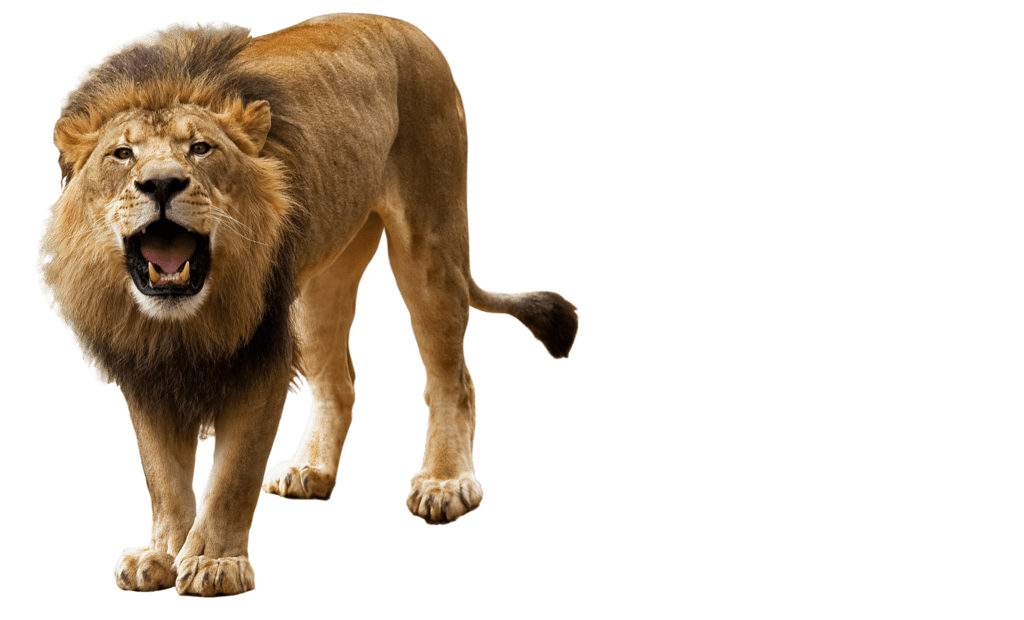 Vijay 3d Hd Wallpapers Lion Png Images Free Download Lions