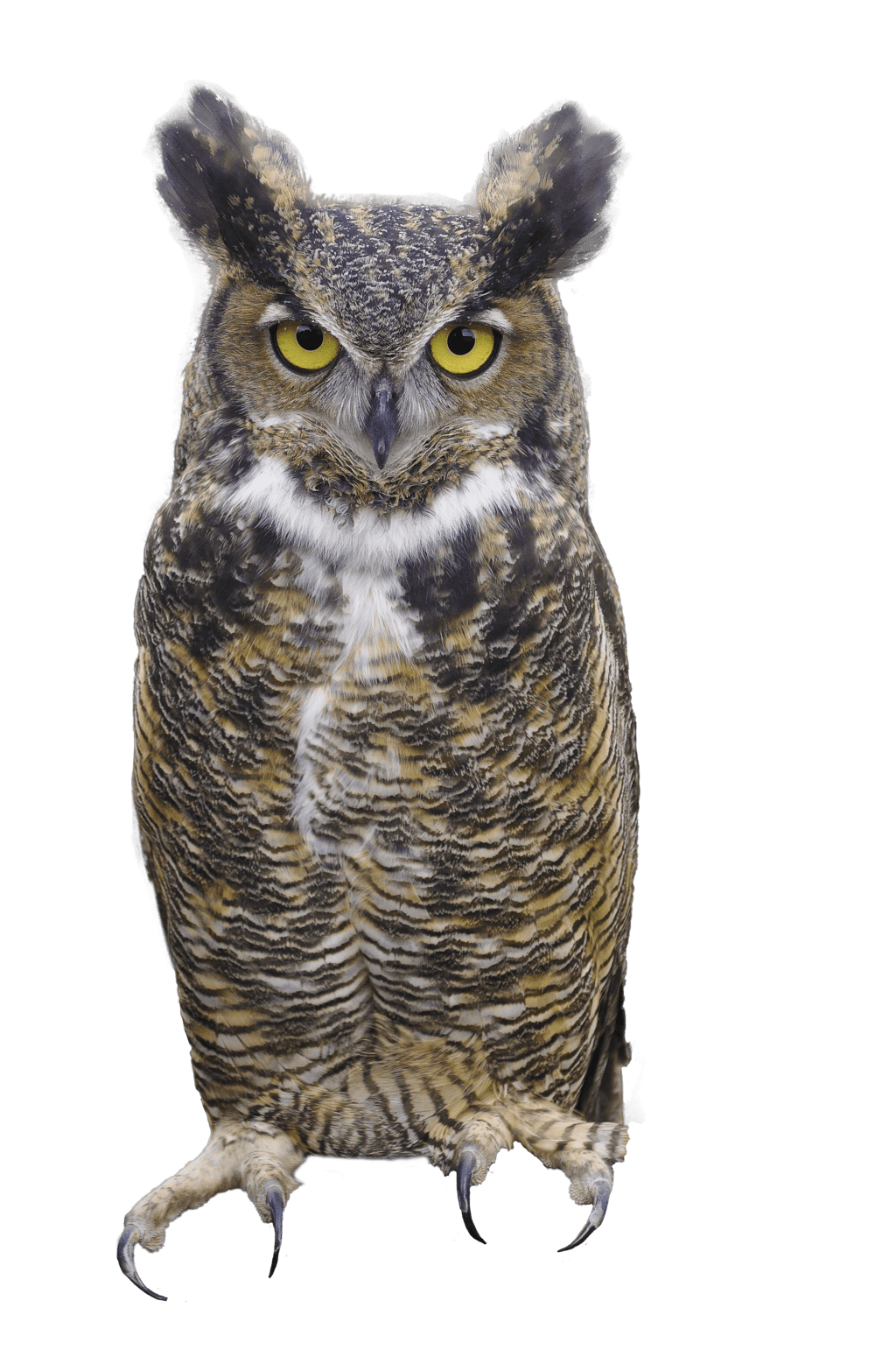 Animated Fish Wallpaper Hd Owl Png