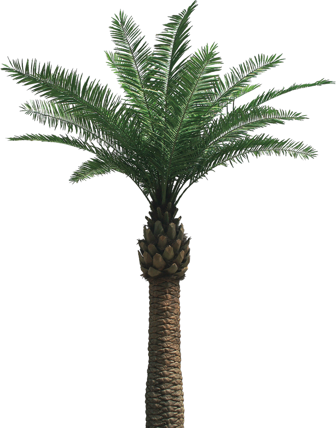 Palm Tree Top View Png Palm Tree Png