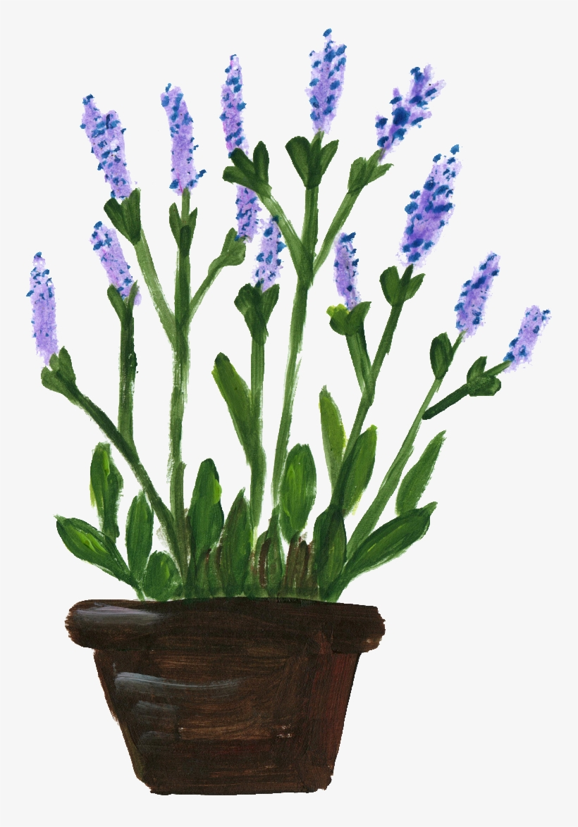 Dibujos De Macetas Flower Pots With Flowers Png Potted Flower Png Lavanda En Maceta