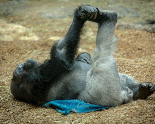 animals-yoga17
