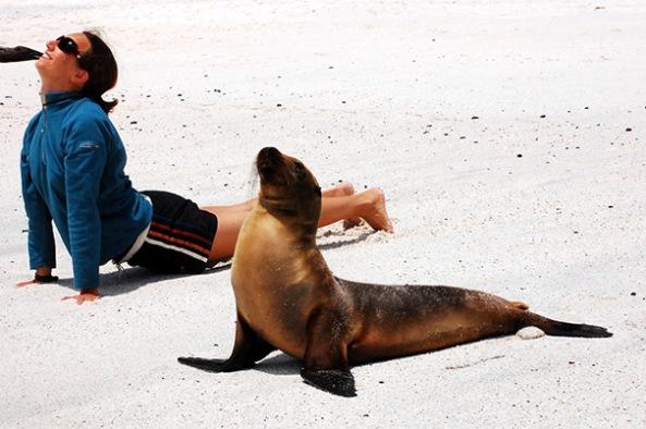 animals-yoga5