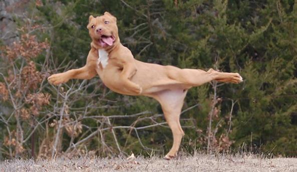 animals-yoga7