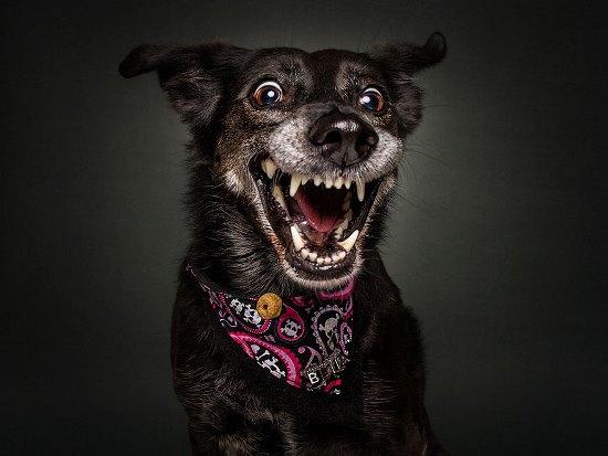 dogs-catching-treats-fotos-frei-schnauze-christian-vieler-13-57e8d0a30b624__880