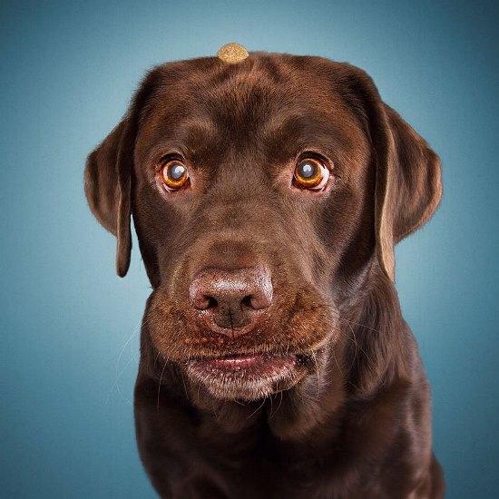 dogs-catching-treats-fotos-frei-schnauze-christian-vieler-20-57e8d0b00611f__880
