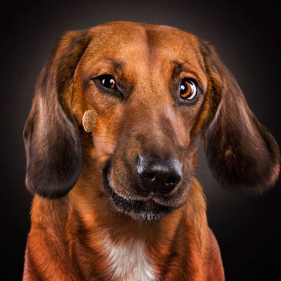 dogs-catching-treats-fotos-frei-schnauze-christian-vieler-46-57e8d0e6c7bcb__880