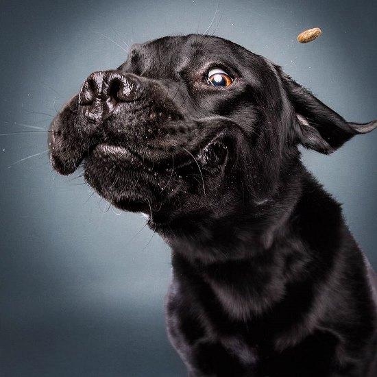 dogs-catching-treats-fotos-frei-schnauze-christian-vieler-47-57e8d0e8afec8__880