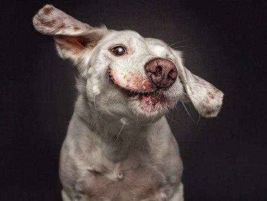 dogs-catching-treats-fotos-frei-schnauze-christian-vieler-9-57e8d09a03a73__880