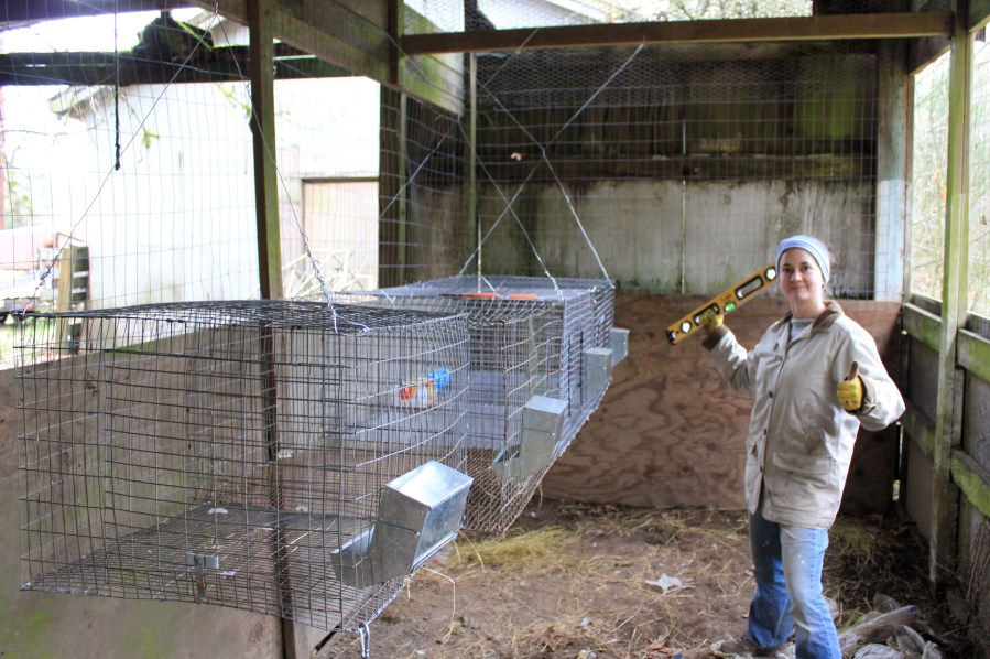 All Wire Cages Hung and Ready for Rabbits | Pocket Pause