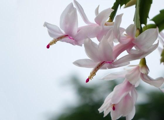 flower-1963098_1920
