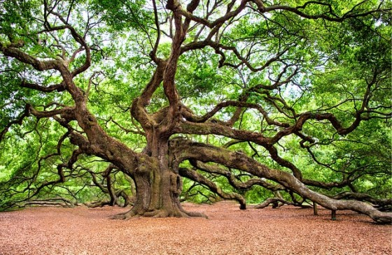 angel-oak-2018822_640