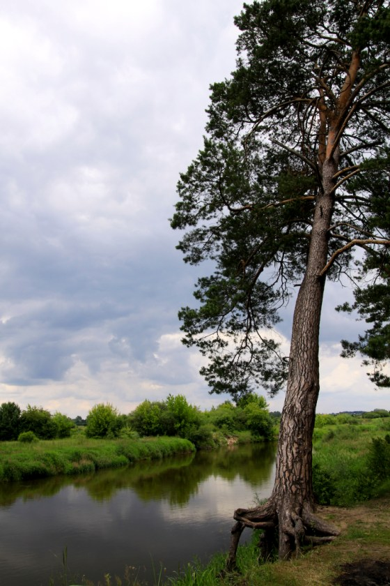 drzewo nad Bugiem