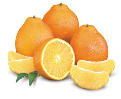 Honeybell Tangelos, Oranges  Grapefruit from Poinsettia Groves
