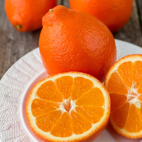 Honeybell Tangelos - Poinsettia Groves Florida Oranges  Indian