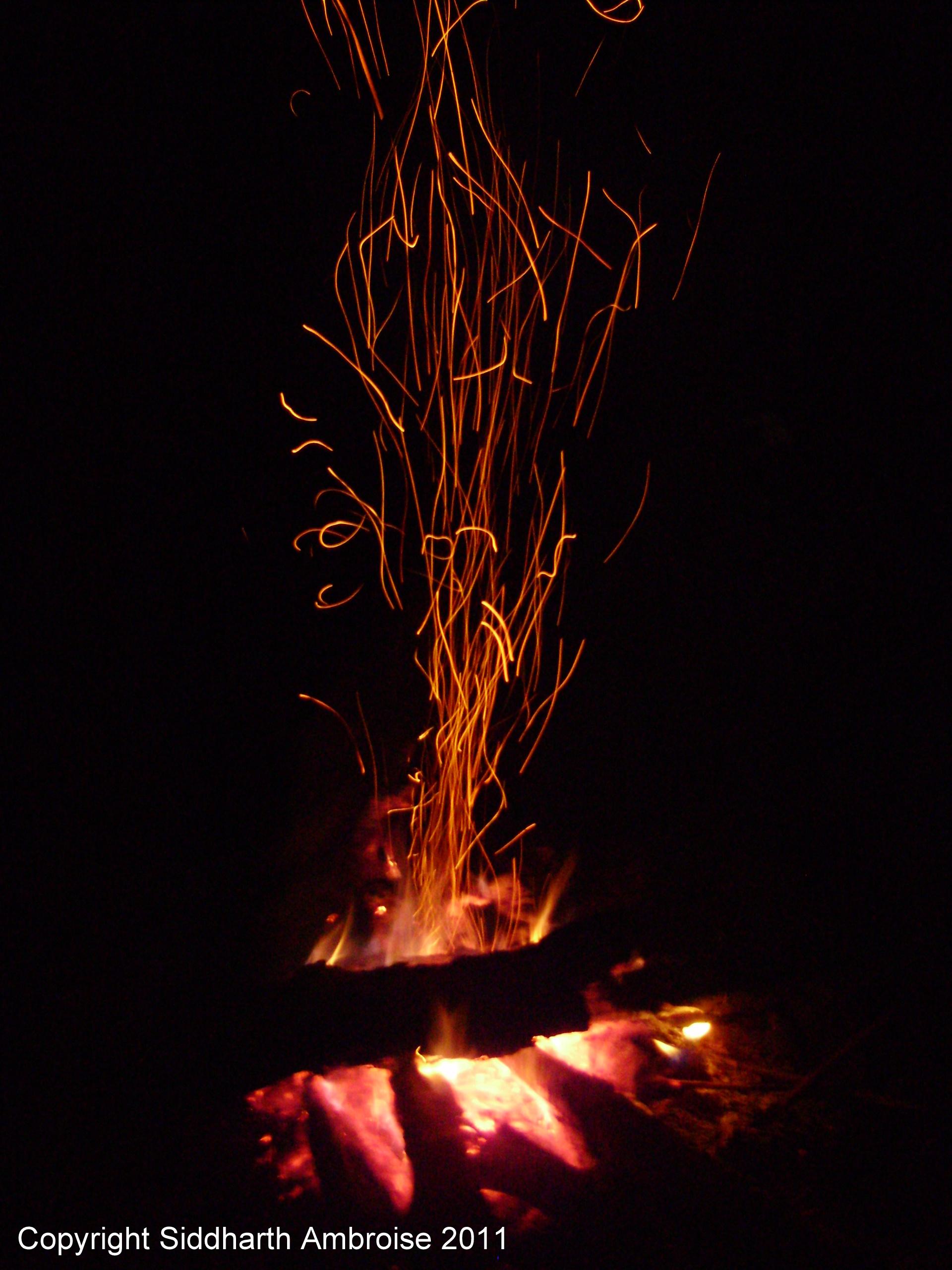 Fire Lion Hd Wallpaper Gallery Fire Cinders
