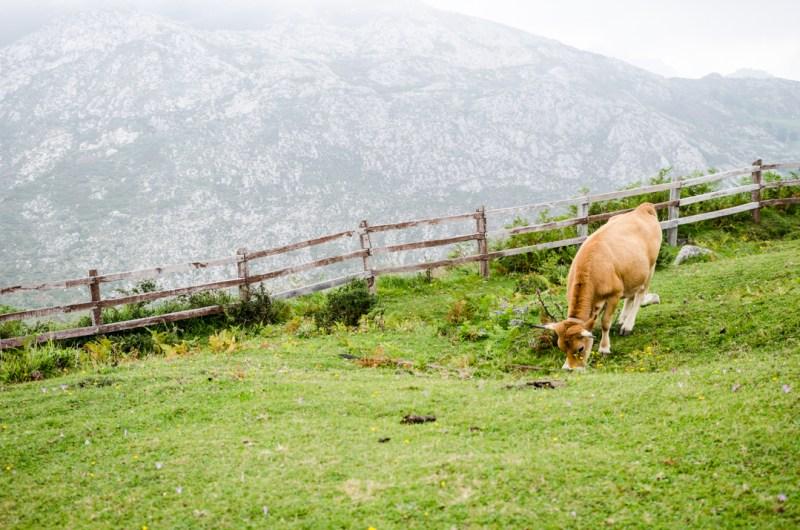Picos de Europa - zielona strona Hiszpanii (13)