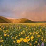 Tuolumne meadows. Туолумнские луга в Йосемити