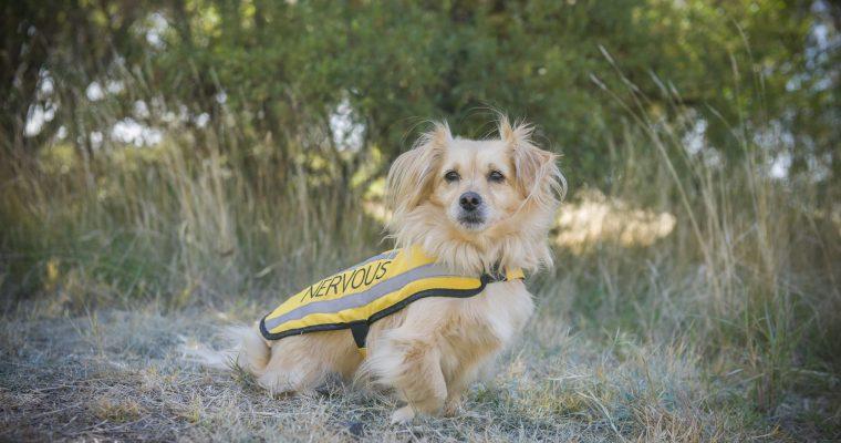 Friendly Dog Collars Nervous Coat