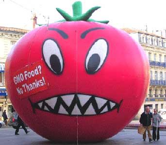 Monster GMO tomato