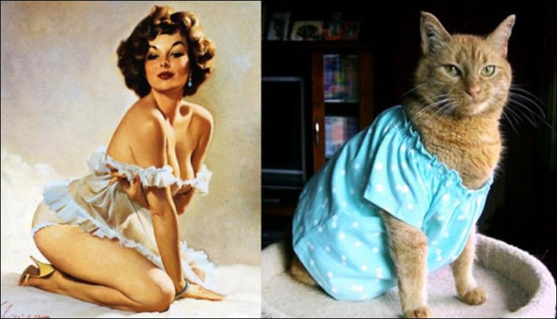 cats-pinup-girls-028