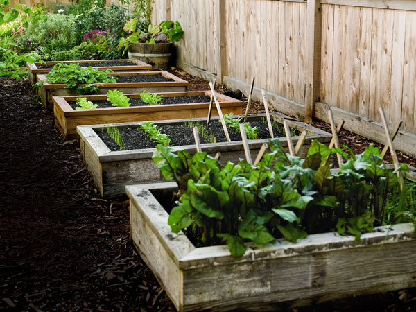 How to Build Raised Garden Bed Best Raised Garden Beds - raised bed garden designs