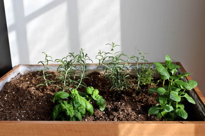 Indoor Herb Garden DIY