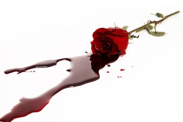 Rose image (low res)