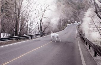 robert-zhao-deer-park-84-x-121-cm-archival-pigment-print-edition-of-5-1-ap-2016_image-courtesy-of-mizuma