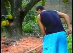 Brasileiros transando no pé de jaca.