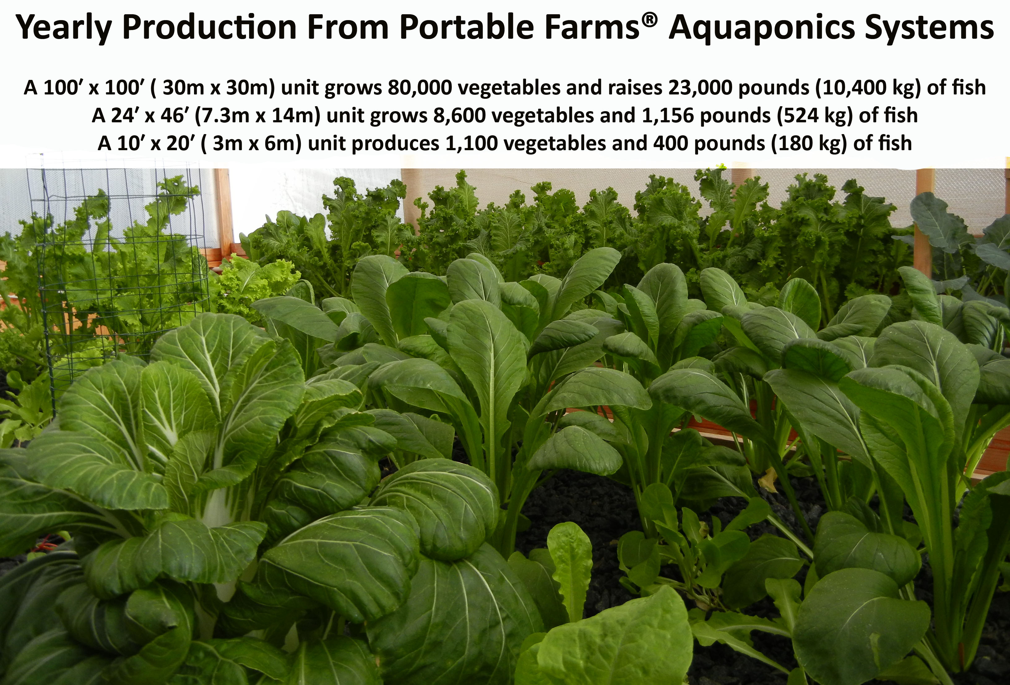 Planting Tables For Sale What Can You Grow In Aquaponics