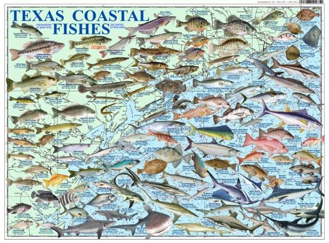 TEXAS COASTAL FISHES