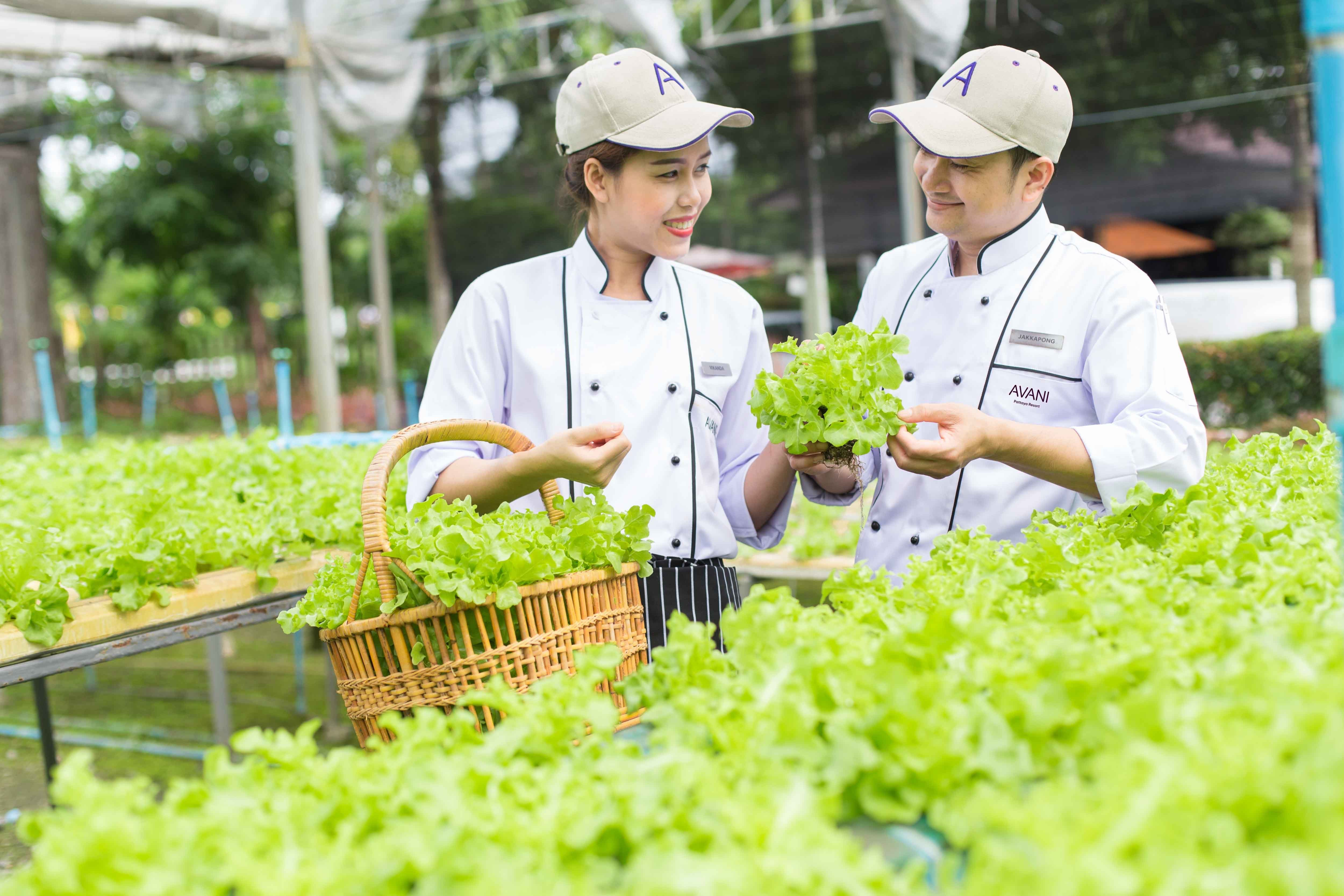 Avani Pattaya Resort - Hydroponics Farm Chefs