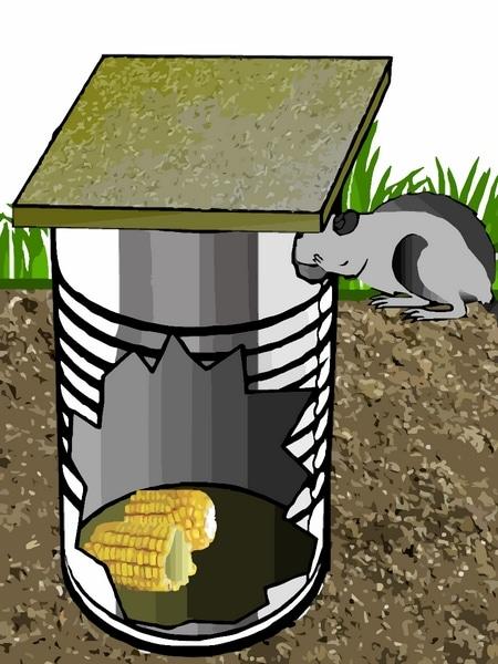 Lutter contre les rats au poulailler poulailler bio - Piege a souris fait maison ...