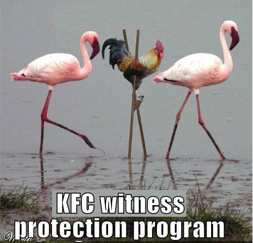 KFC Witness Protection copy