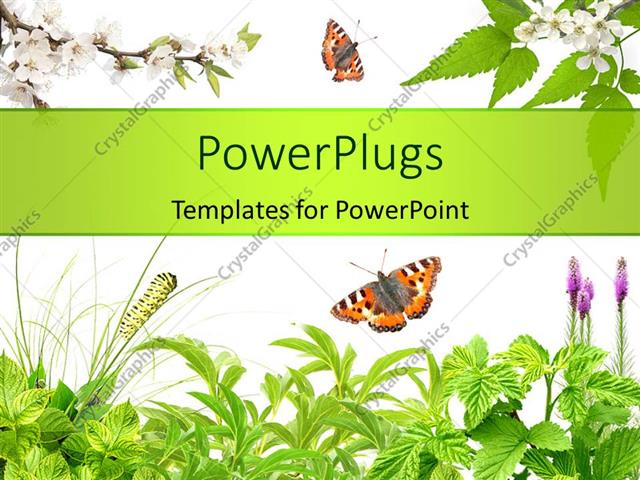 PowerPoint Template Summer frame with green leaves, flowers and - summer powerpoint template