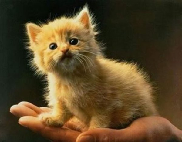 These-20-Baby-Animals-Are-So-Small-They-Can-Fit-In-The-Palm-Of-Your-Hand20
