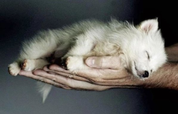 These-20-Baby-Animals-Are-So-Small-They-Can-Fit-In-The-Palm-Of-Your-Hand6