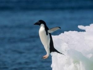 suicidal-penguin_320x245