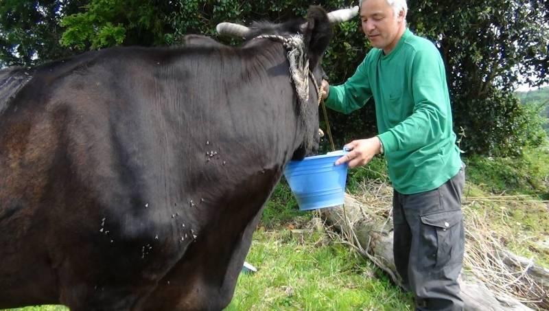 Наото Мацумура заботится о брошенных животных в зоне Фукусима.