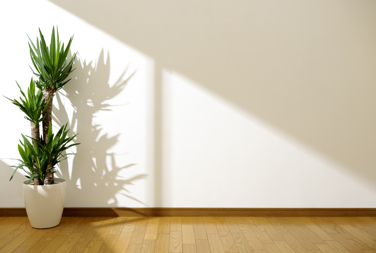 Wohnzimmer Pflanze Feng Shui Spring Clean Your Apartment The Feng Shui Way Planned