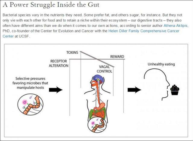 Gut, Vagus nerve and mind cotnrol