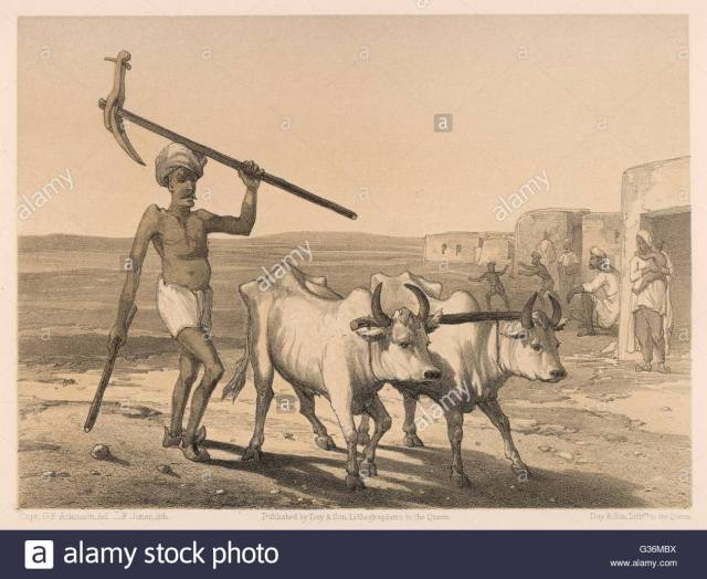 indian-farmer-and-a-yoke-of-oxen-farming-in-india-date-1860-G36MBX