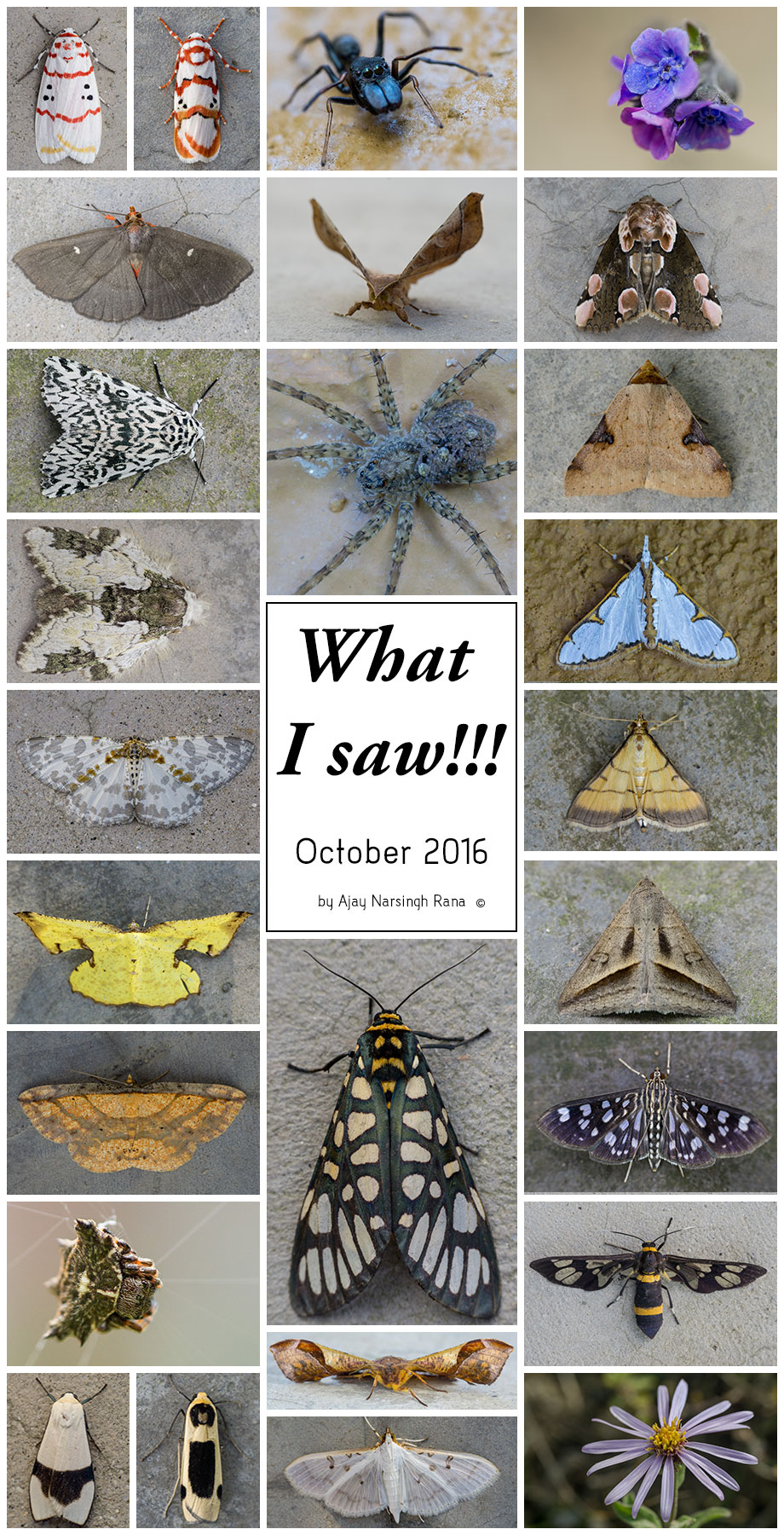 what i saw october 2016
