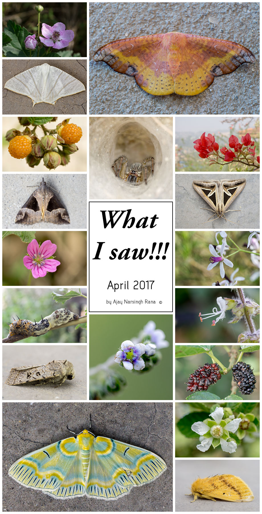 What I Saw in April 2017