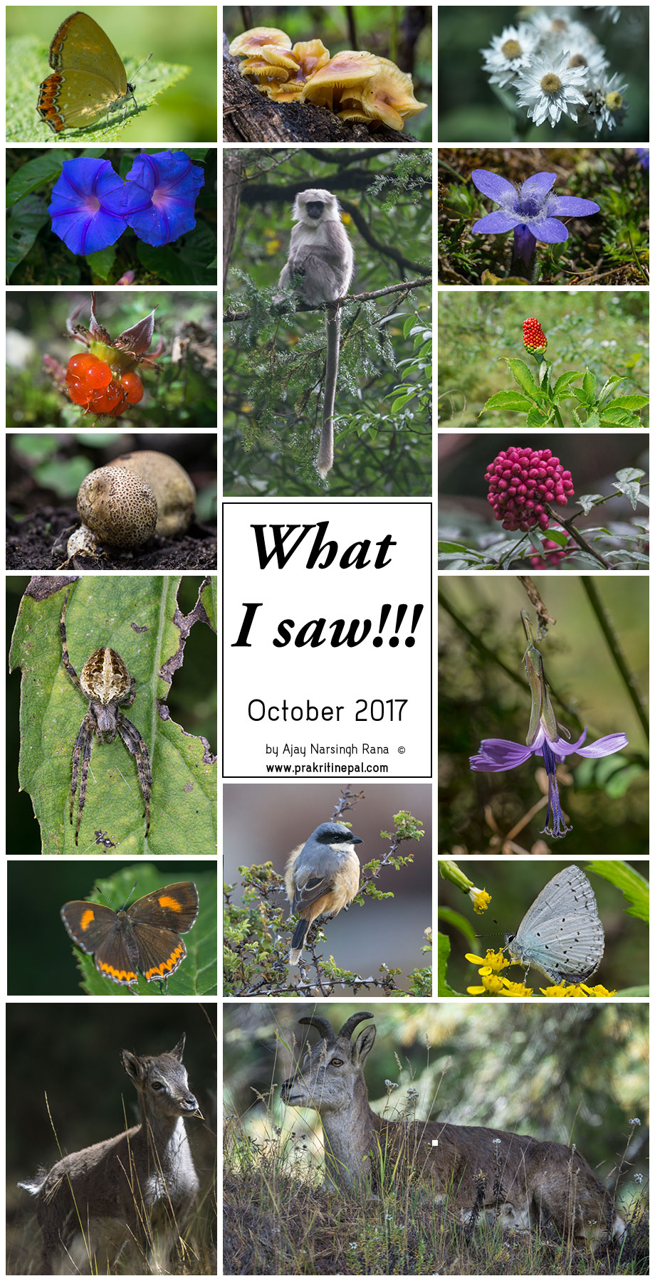 what i saw october 2017