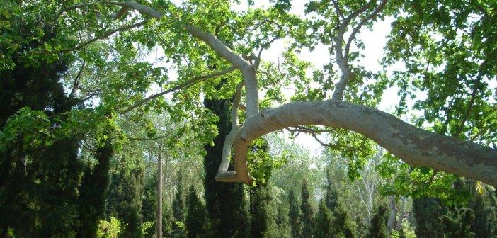 Δάσος Καισαριανής – το πράσινο δίπλα μας
