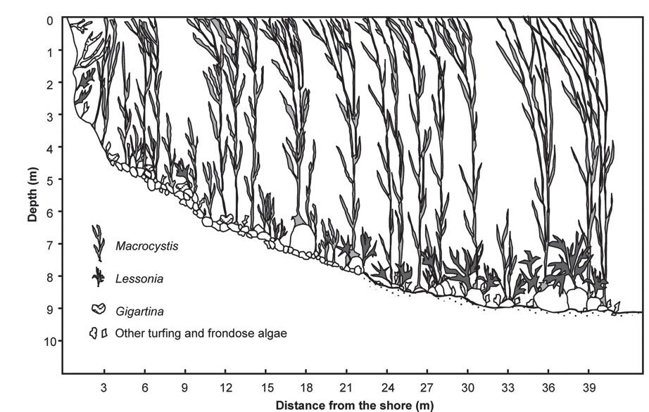 1 line diagram