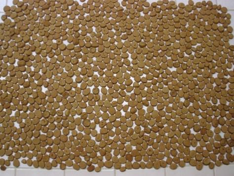 Anise Cookies 1,134
