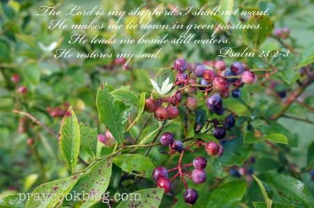 Blueberry Bush July