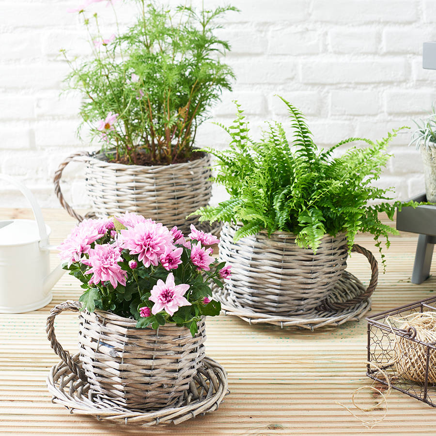 Large Tea Cup Planter Plants Pot Indoor And Outdoor Pretend Magazine